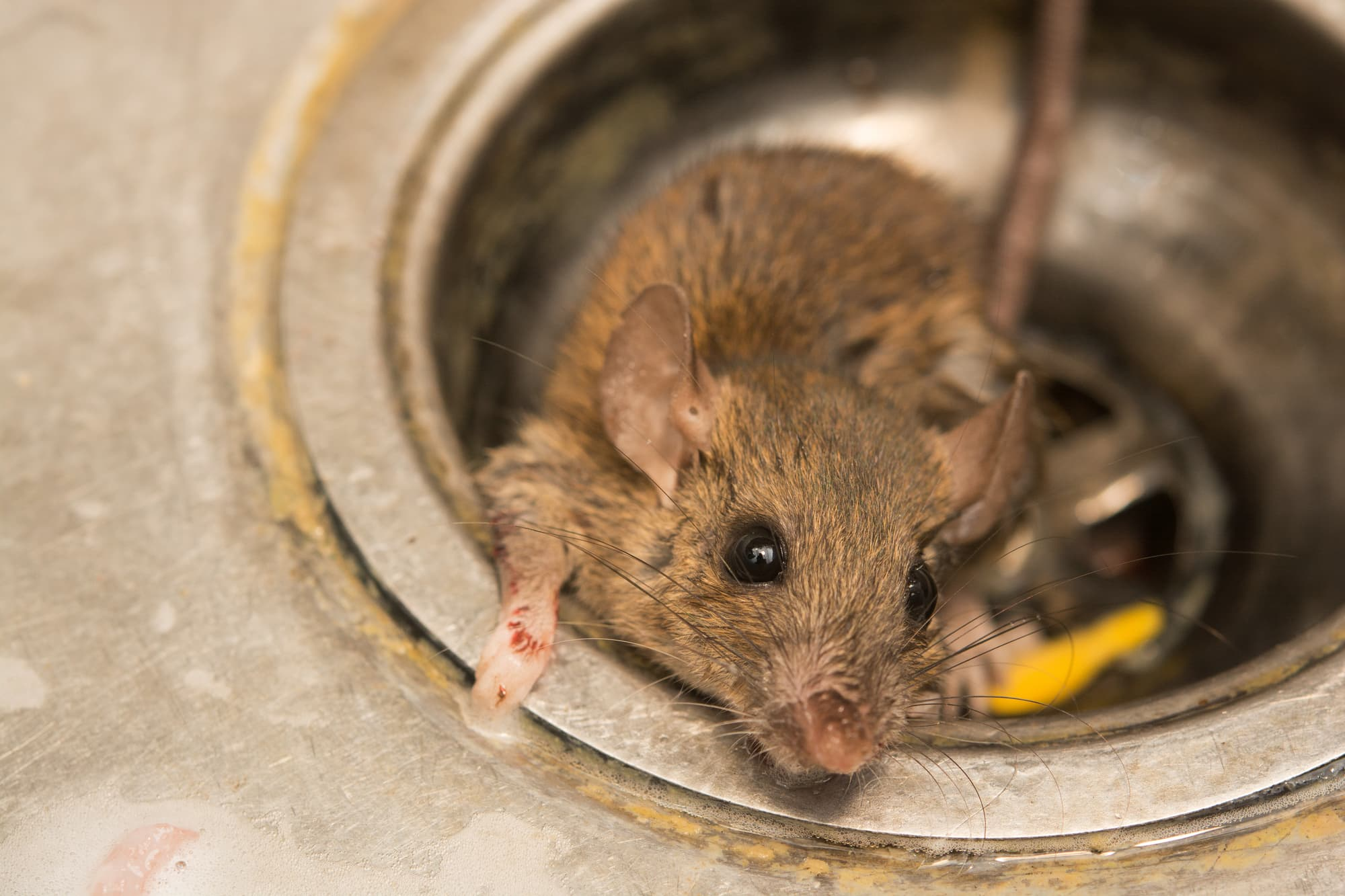 Home Pest Control Services Never Disappoint
