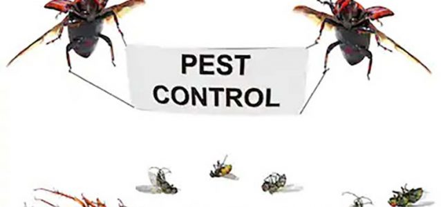 How to know when it's time to call a pest control company?